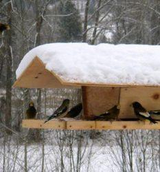 Самодельные кормушки для птиц