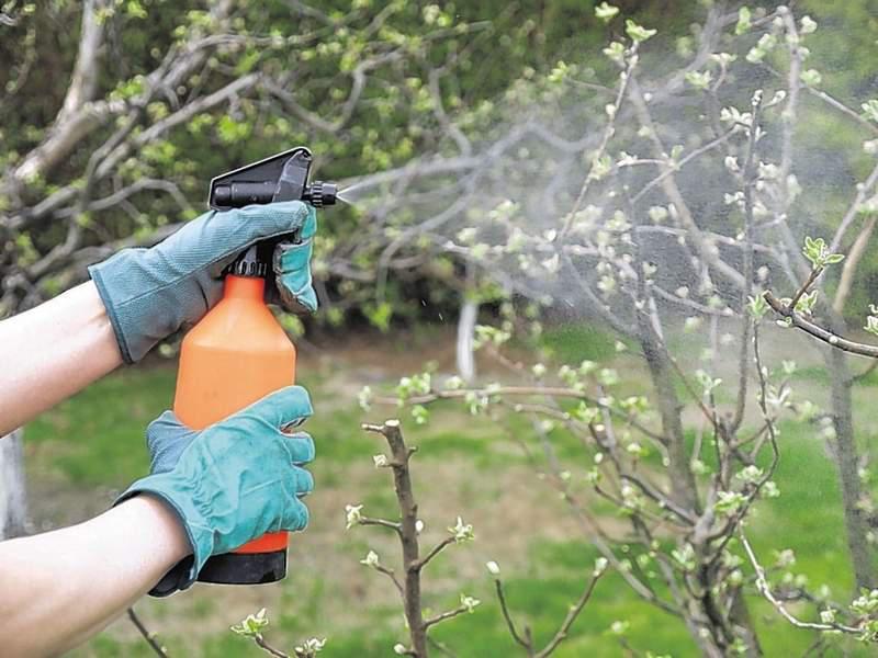 Подготовка плодовых к зимеЧем подкормить плодовые деревья