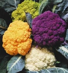 рассада цветной капусты выращивание