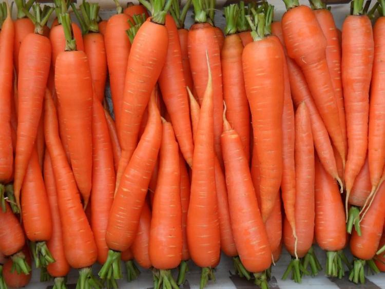 Картинки по запросу Сорта моркови «Краса девица»