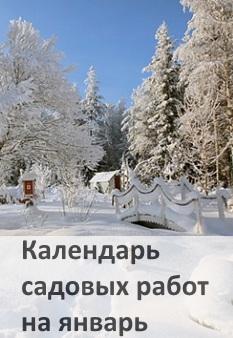Календарь садовых работ на январь