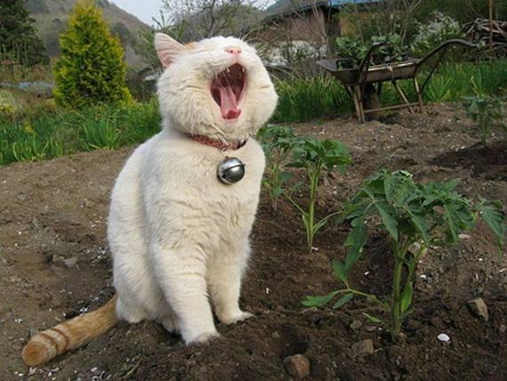 Как отучить котов гадить на грядке