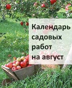 Календарь садовых работ на август