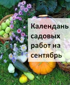 Календарь садовых работ на сентябрь
