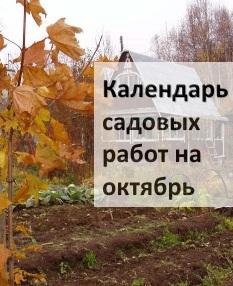 Календарь садовых работ на октябрь